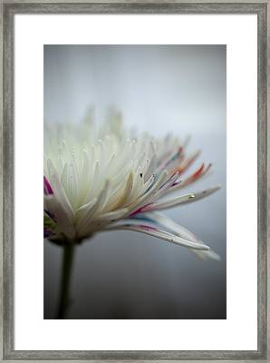 White Colors Framed Print by Kathy Williams-Walkup