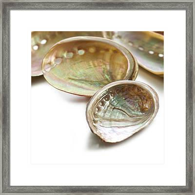 White Coloured Abalone Shells Framed Print