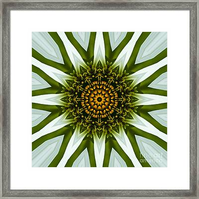 White Coneflower Mandala 12 Framed Print