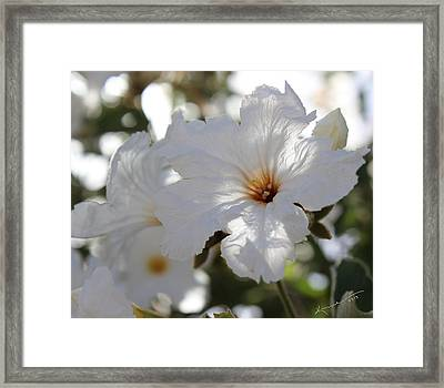 White Cordia Framed Print by Kume Bryant