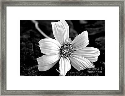 White Cotton Framed Print