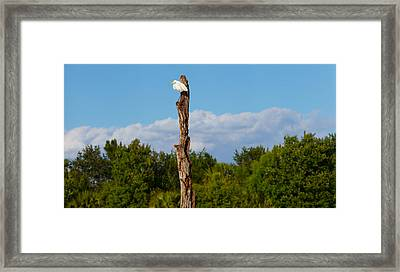 White Crane On A Dead Tree, Boynton Framed Print by Panoramic Images