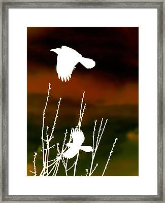 White Crow And The Bluejay Framed Print