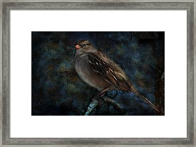 Framed Print featuring the photograph White-crowned Sparrow by Barbara Manis