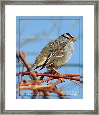 Framed Print featuring the photograph White Crowned Sparrow by Heidi Manly