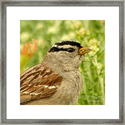 Framed Print featuring the photograph White Crowned Sparrow Portrait by Bob and Jan Shriner