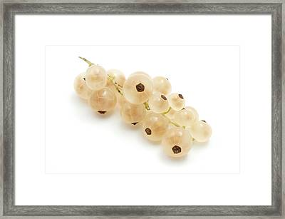 Framed Print featuring the photograph White Currant  by Fabrizio Troiani