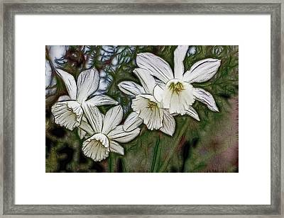 White Daffodil Flowers Framed Print by Photographic Art by Russel Ray Photos