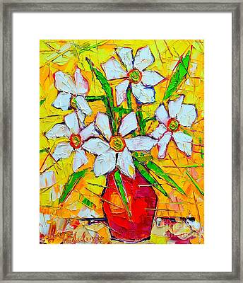 White Daffodils  Framed Print by Ana Maria Edulescu