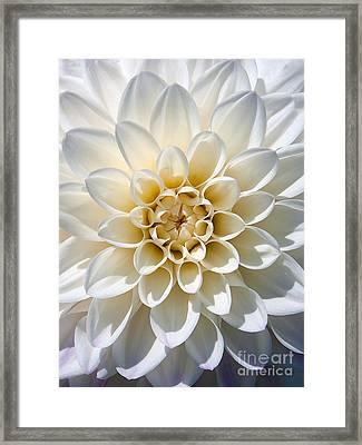 Framed Print featuring the photograph White Dahlia by Carsten Reisinger