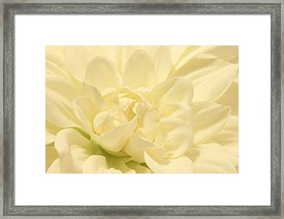 White Dahlia Dreams Framed Print