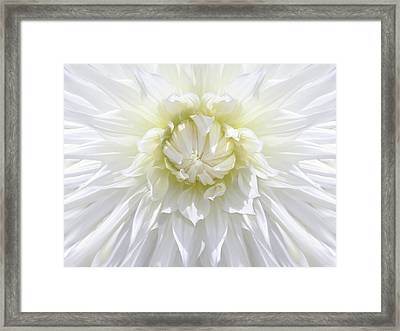 White Dahlia Floral Delight Framed Print by Jennie Marie Schell