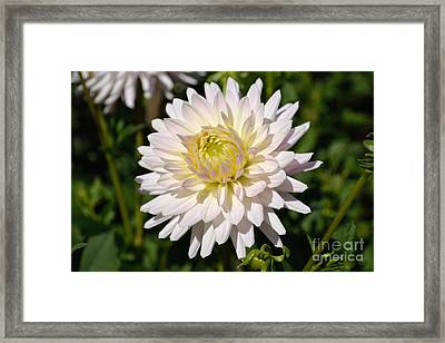 Framed Print featuring the photograph White Dahlia Flower by Scott Lyons