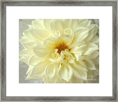 Framed Print featuring the photograph White Dahlia by Olivia Hardwicke