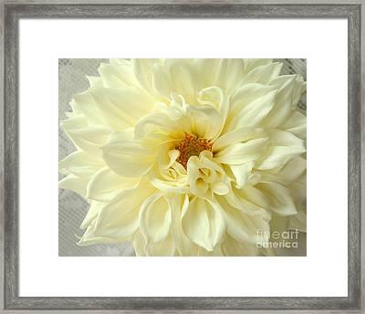 White Dahlia Framed Print by Olivia Hardwicke