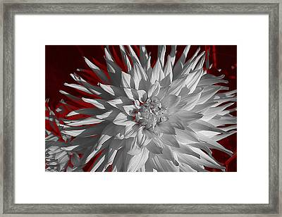 Framed Print featuring the digital art White Dahlia by Richard Farrington