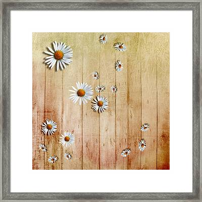 White Daisies Framed Print by David Ridley
