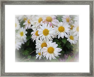 White Daisies Framed Print by Kay Novy