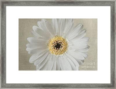White Daisy 2 Framed Print