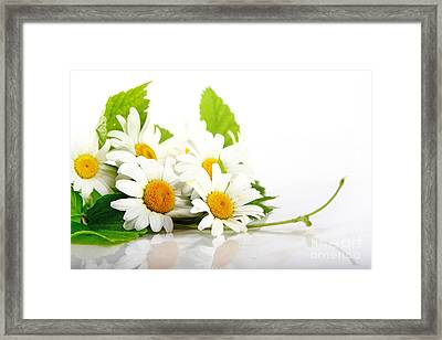 White Daisy Flowers Framed Print by Boon Mee