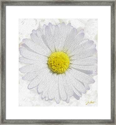 White Daisy On White Framed Print by Jon Neidert