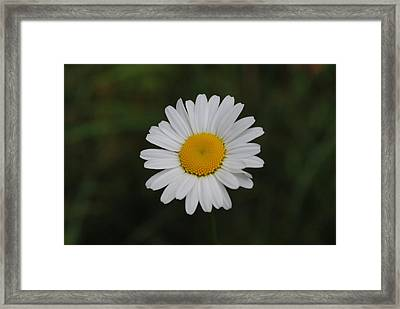 Framed Print featuring the photograph White Daisy by Robert  Moss