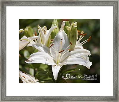 Framed Print featuring the photograph White Day Lily 20120615_36a by Tina Hopkins
