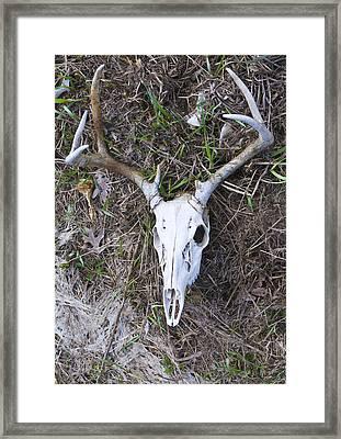 White Deer Skull In Grass Framed Print