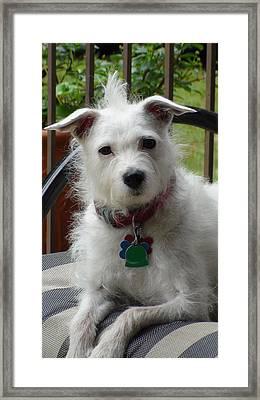 White Dog Framed Print by Sanford