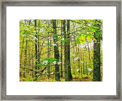 White Dogwood In Meriwether Lewis Campground At Mile 386 Of Natchez Trace Parkway-tn Framed Print by Ruth Hager