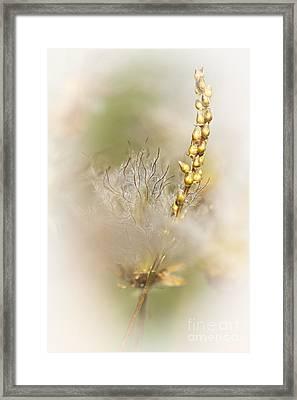White Dryas  Framed Print