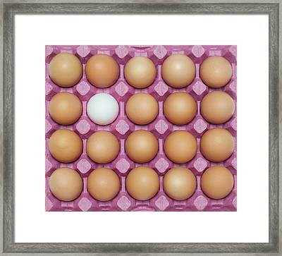 White Egg With Large Group Of Brown Framed Print by Ozgur Donmaz