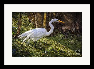 Fish Eating Birds Framed Prints