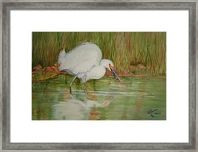 White Egret Wading  Framed Print
