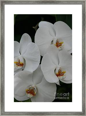 White Elegance Framed Print by Mary Lou Chmura