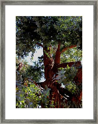 White Eucalyptus 2 Framed Print by Jennifer Muller