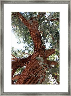 White Eucalyptus Tree Framed Print by Jennifer Muller