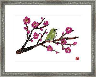 White Eye And Japanese Plum Tree Framed Print by Keiko Suzuki
