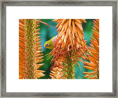 Framed Print featuring the photograph White-eye On Deer-horn by Michele Penner