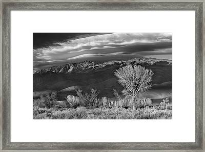 White Face Framed Print by Don Hall
