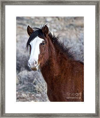 White-faced Mustang In December V Framed Print by Vinnie Oakes