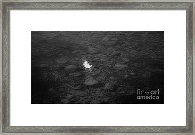 White Feather Framed Print by Michelle O'Neill