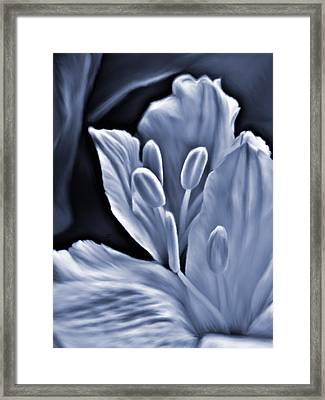 White Feathers Framed Print by Barbara St Jean