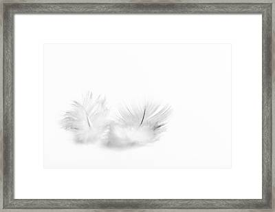 White Feathers Framed Print