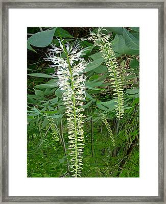 White Fern Framed Print by Aimee L Maher Photography and Art Visit ALMGallerydotcom