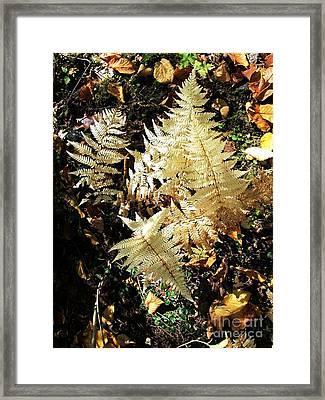 White Ferns Framed Print by Linda Marcille