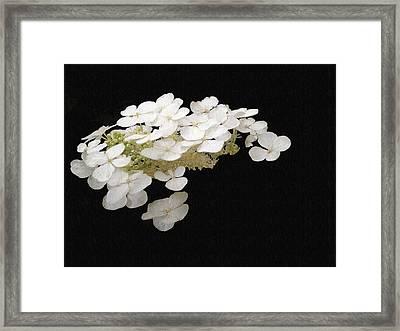 White Floral Canvas Framed Print by Dennis Buckman