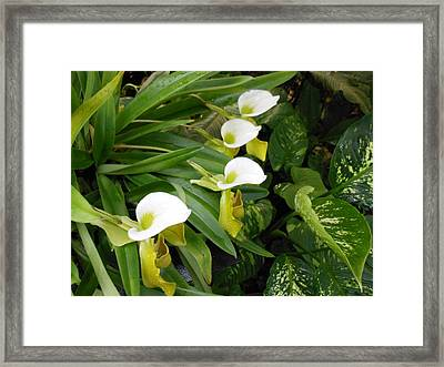 White Flower Array Framed Print