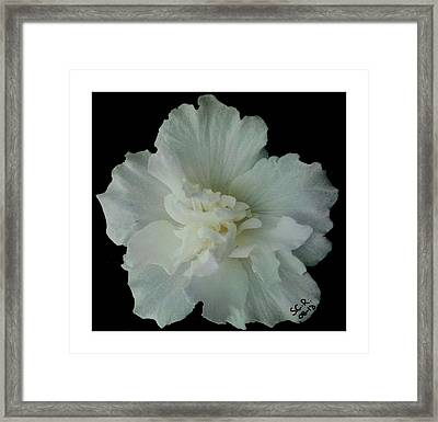Framed Print featuring the photograph White Flower By Saribelle Rodriguez by Saribelle Rodriguez