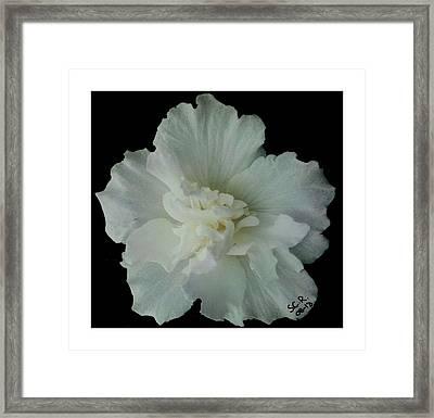 White Flower By Saribelle Rodriguez Framed Print by Saribelle Rodriguez